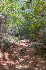 Nature and forest in Africa. Hiking trail in the Tablemoutain National Park, Cape Town, South Africa.