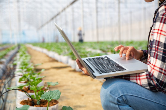 Agronomists and farmers are inspecting plants In a greenhouse farm with a laptop, farmers and researchers in the analysis of the plant. agricultural technology concepts.