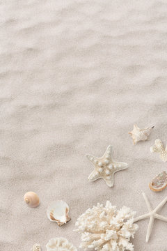 beach / sea themed banner or header with beautiful shells, corals and starfish on pure white sand - summer concept