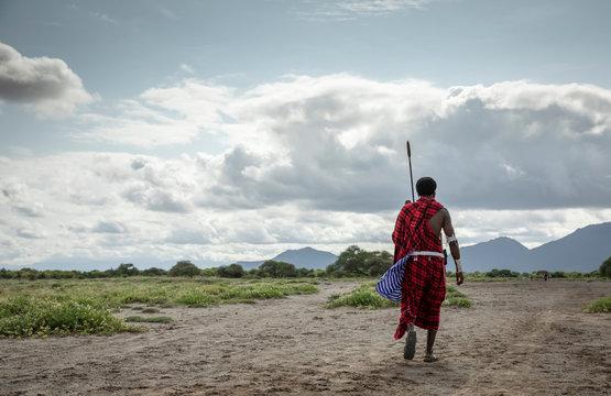 maasai man walking in savannah