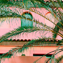 Plants on pink fashion concept. Palm. Canary island