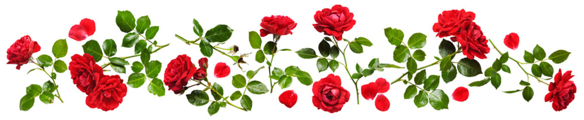 Photo sur Toile Roses Red roses composition banner.