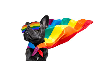 Self adhesive Wall Murals Crazy dog gay pride dog