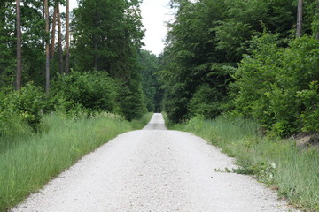 Ścieżka leśna lato las