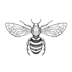 Hand drawn honey bee in zentangle style. Black and white vector illustration