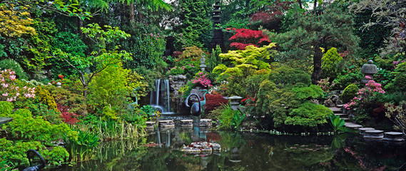 An impressive Japanese water garden with colourful display of Acers and Maples shrubs and plants