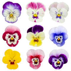 Set of pansies isolated on white background.