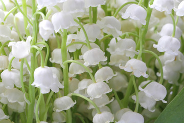 Wall Murals Lily of the valley Lily of the valley flowers (Convallaria) closeup as background. Natural color, high contrast.