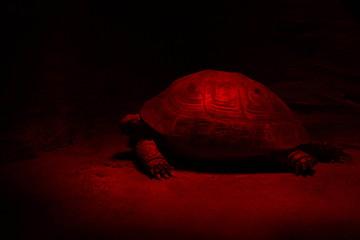 turtle in a red terrarium