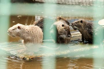 Beavers in the aviary