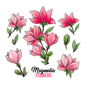 Magnolia flower bouquets in blossom, beautiful home decor and interior design, isolated illustration vector set. Pink floral sketch drawings. Spring blossom realistic cliparts. Wildflowers pencil