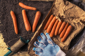 Organic homegrown carrots packing for farmer's market