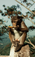 The monkey sits on a stone and eats a piece of bread