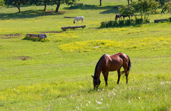 Horses in a Field at an Equestrian Center