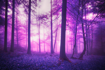 Mystic fantasy violet colored foggy enchanted forest landscape.
