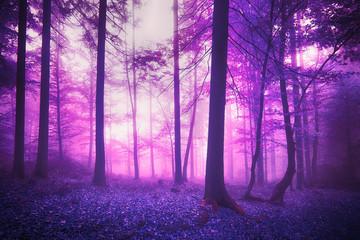 Mystic fantasy violet colored foggy enchanted forest landscape.
