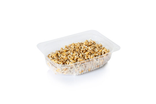 Raw sprouted wheat germ for healthy food in a transparent container isolated on white background