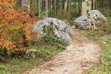 Wanderweg mit Felsblöcken durch den Zauberwald am Hintersee in Bayern, Ramsau bei Berchtesgaden.