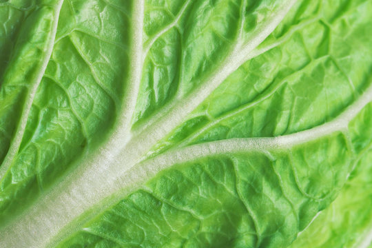 leaf of fresh chinese cabbage or napa cabbage texture, studio macro shot, close up.
