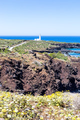 Linosa Island - Volcanic island covered with plants and flowers near Lampedusa Sicily Italy