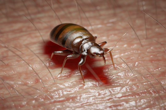3d rendered medically accurate illustration of a bed bug on human skin