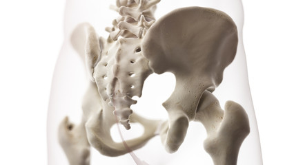 3d rendered medically accurate illustration of the sacrum