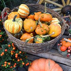 Wochenmarkt, Herbst, Kürbisse, Bauernhof