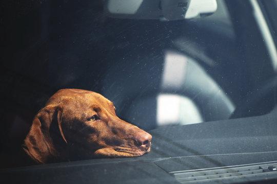 Dreary dog left alone in locked car.