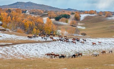 Inner Mongolia WuLanBu series horses
