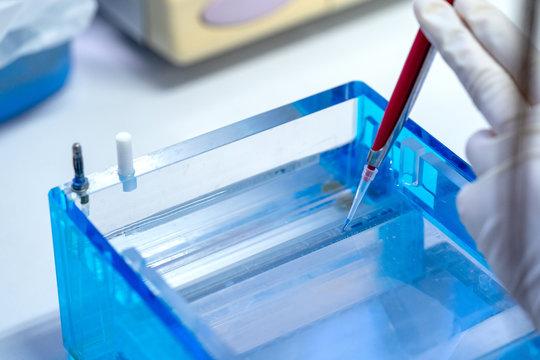 Molecular technique gel electrophoresis for DNA sample method decrypt the genetic code.
