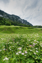 Wall Mural - colorful wildflower meadow and old hut in a mountain landscape with waterfall