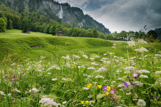 colorful wildflower meadow and old hut in a mountain landscape with waterfall
