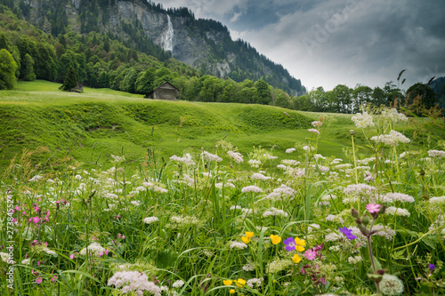 Fotomurales colorful wildflower meadow and old hut in a mountain landscape with waterfall