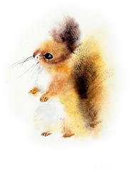 Red Squirrel. Watercolor hand drawn illustration.