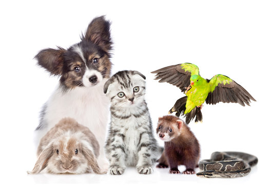 Big group of pets sitting together in front view. Isolated on white background