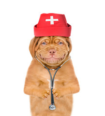 Smiling puppy dressed like a doctor with a stethoscope on his neck. isolated on white background
