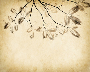 Fototapete - leaves tree with old grunge antique paper texture