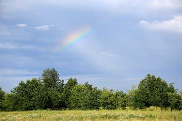 Fototapeta Piękna kolorowa tęcza nad zielonym liściastym lasem, łąką.