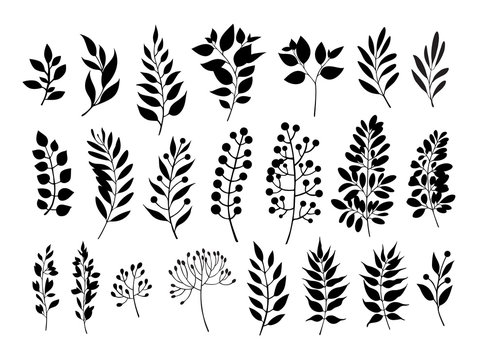 Silhouettes of leaves set. Herbs and plants collection. Vector illustration.