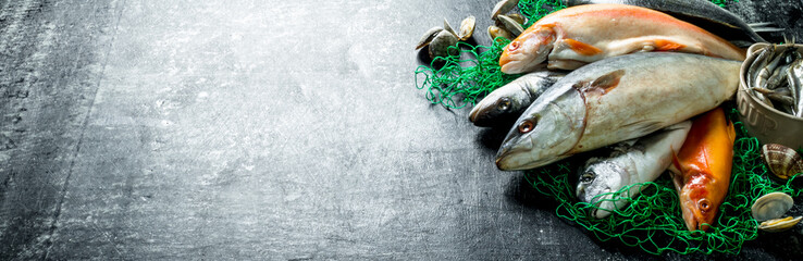 Fresh fish on a fishing net with oysters. Wall mural