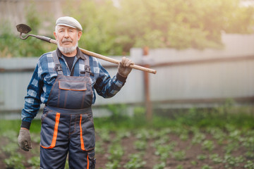 Senior elderly man reclaims earth with chopper hoe on potato field. Concept eco farm, agriculture