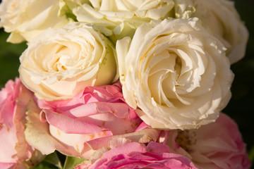 Beautiful tender roses texture photo