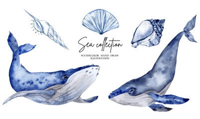 Watercolor illustration with blue whale isolated on white background Wall mural