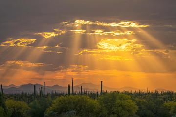 Arizona Orange Sunset With God Rays & Saguaro Cactus In Foreground In Southern Arizona