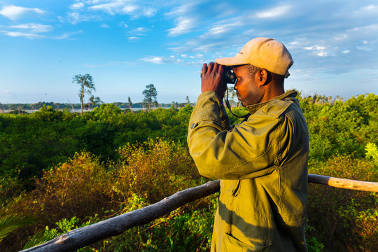 Ranger, Viewing tower, Kasanka Bat migration, Kasanka National Park, Serenje, Zambia, Africa