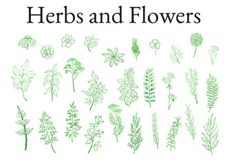 Vector colorful illustration set of herbs, plants and flowers. Hand drawn graphic sketches for you design