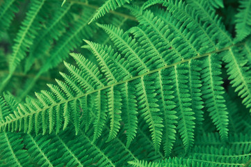 Green background of fern leaves. copy space