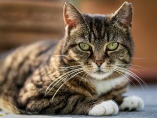 Die schönste Katze der Welt - The most beautiful cat in the world