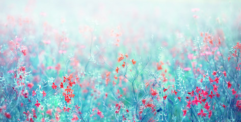 Nature abstract background wild blossoming grass flowers in field meadow close-up soft focus. Beautiful summer nature landscape, toned blue turquoise, copy space.