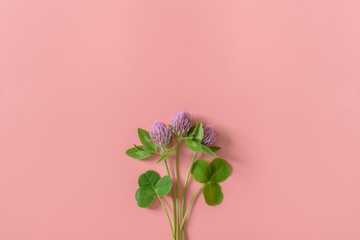 Small bouquet of clover flowers on pink background. Flat lay. Minimal nature concept